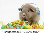 curly party  curly guinea pig  | Shutterstock . vector #336415064