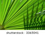 Palm Leaf In Backlight With...