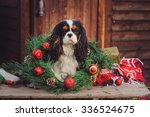 Cute Funny Cavalier King...