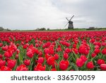 Windmill And Tulips In Holland...