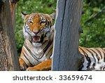 Tiger Smile