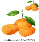 tangerine fruit  mandarin .... | Shutterstock .eps vector #336599249