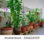 Home Grown Flowers  Vegetable...