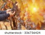 Farmer Inspecting His Wine...
