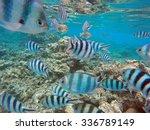 Tropical Fish At Bora Bora ...