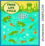 frog life cycle   cartoon... | Shutterstock .eps vector #336851234