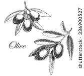vector olive branch hand drawn... | Shutterstock .eps vector #336900527