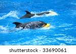 two dolphins with disks. | Shutterstock . vector #33690061