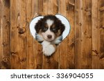 Stock photo puppy looks through a heart in the wall 336904055