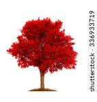 Red Elm Tree  Isolated Over...