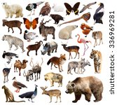 brown bear and other asian... | Shutterstock . vector #336969281
