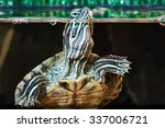 Small Red Eared Turtle In...