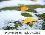 Fallen Autumn Leaves On Grass...