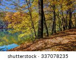 colorful leaves on trees along... | Shutterstock . vector #337078235