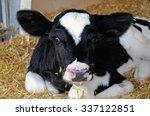 Small photo of Calf