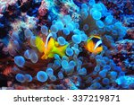Anemone Fish  Clown Fish ...