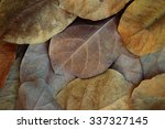 brown and yellow dried leaves. | Shutterstock . vector #337327145