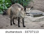 bat eared fox from africa with... | Shutterstock . vector #33737113