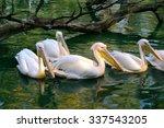 rosy pelican in green pond | Shutterstock . vector #337543205