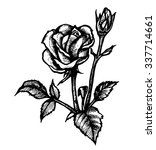 contour rose. vector hand drawn ... | Shutterstock .eps vector #337714661