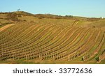 Attractive vineyard at dusk in Northern California - stock photo