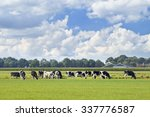 Holstein Friesian Cattle In A...