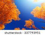 Yellow Forest In Autumn