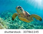 Sea Turtle Close Up Over Coral...