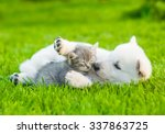 Stock photo white swiss shepherd s puppy playing with tiny kitten on green grass 337863725