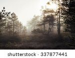 Foggy Forest. An Image Of A...