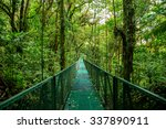A Bridge In The Rain Forest