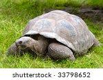 Galapagos Giant Tortoise On...