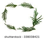 Thuja Branchs Isolated On Whit...