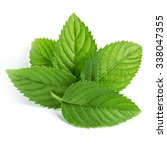 fresh mint leaves isolated on... | Shutterstock . vector #338047355
