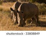 White Rhino Pose