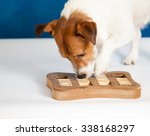 Stock photo dog playing intellectual game jack russell terrier sniffing for yummy 338168297