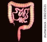 human body parts | Shutterstock . vector #338215121