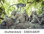 monkey at sacred monkey forest  ... | Shutterstock . vector #338316839