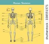 vector illustration of human... | Shutterstock .eps vector #338551571