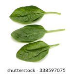 fresh spinach leaves isolated... | Shutterstock . vector #338597075