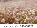 close up of purple buckwheat ... | Shutterstock . vector #338608991