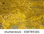 ginkgo maidenhair tree.and the... | Shutterstock . vector #338785181