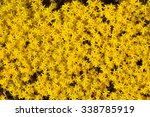 background yellow flower moss | Shutterstock . vector #338785919