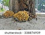 Wild Mushrooms  In The Wild...