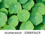 green leaves | Shutterstock . vector #338893619