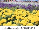 2015 taichung flower carpet... | Shutterstock . vector #338903411