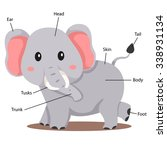 illustrator of elephant body... | Shutterstock .eps vector #338931134