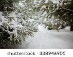 Winter Fir Trees Bunches Full...