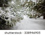 Winter Fir Trees Bunches Full...