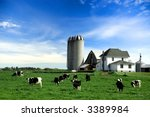 Holstein Cows In Pasture On...